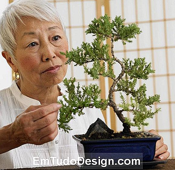 Bonsai, un arte antiguo.