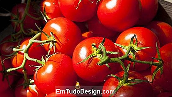 Tomate picadilly