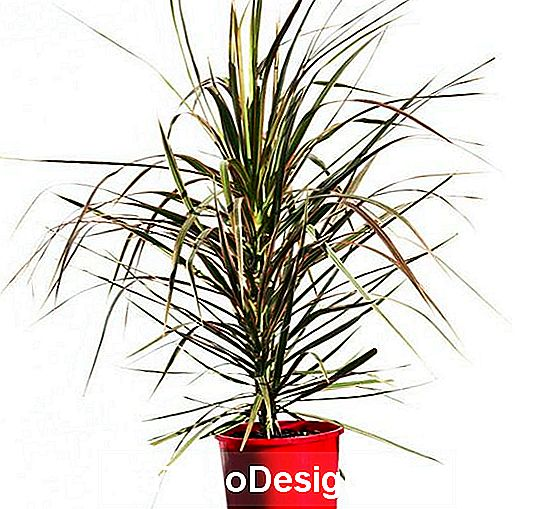 De colorama-cultivar, van naturescolours.com.an