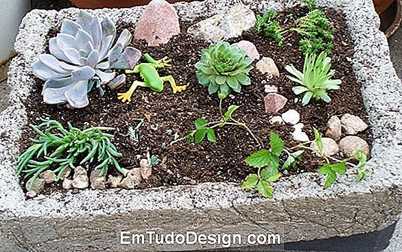 Miniature Rock Garden