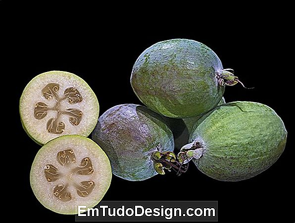 Feijoa: hovedperson i haven